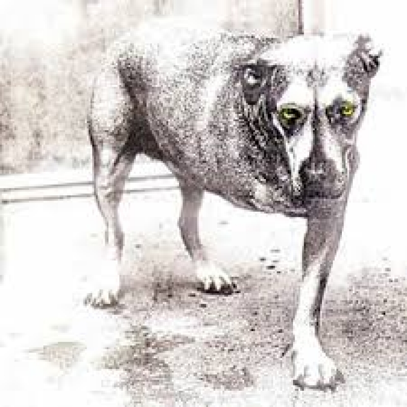 Alice In Chains - Alice In Chains 1995 (CD)